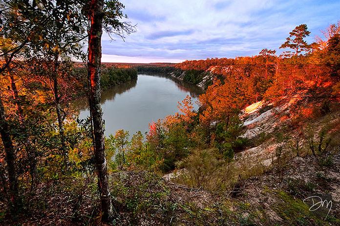Apalachicola Bluffs by David Moynahan