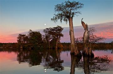 Dead Lakes Sunrise by David Moynahan